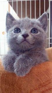 アヒル猫.jpg