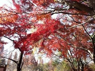 今年初の紅葉見物ざんす1.jpg