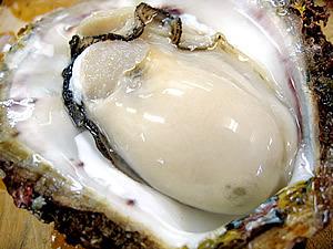 牡蛎ミルク.jpg