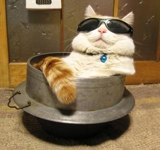 猫なべ.jpg