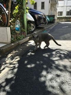 通りすがり猫1.jpg