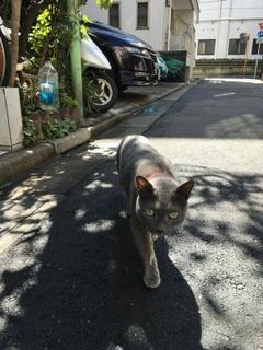 通りすがり猫2.jpg
