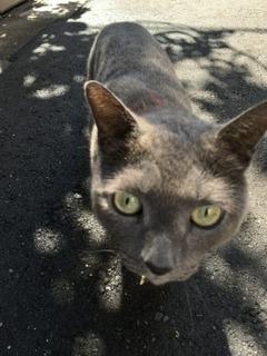 通りすがり猫3.jpg